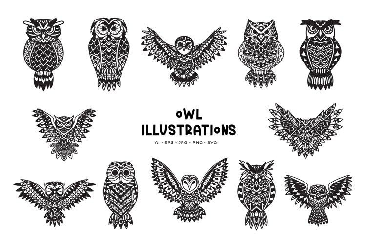 Owl Illustrations