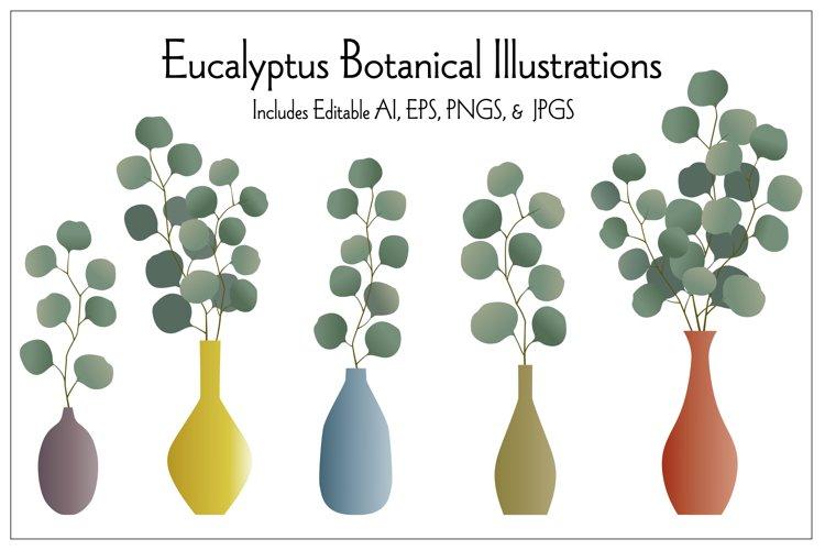 Eucalyptus Botanical Illustrations