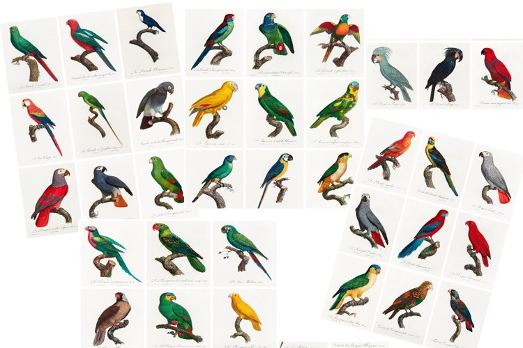 Parrot Journal Tags, 4 Collage Sheets, 36 Tags, JPG and PDF