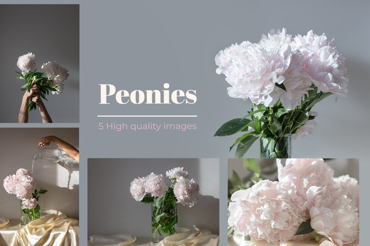 Peony bundle. Fresh minimalistic flower images