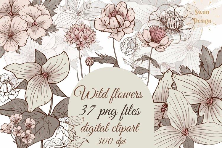 Elegant vintage flowers clipart, line art florals png, beige