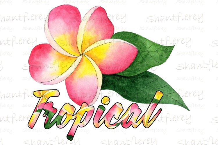 Plumeria Tropical Sublimation, Floral Summer PNG, Tropical