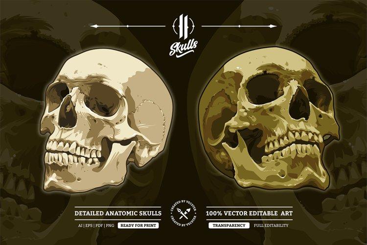 Two Anatomic Vector Skulls