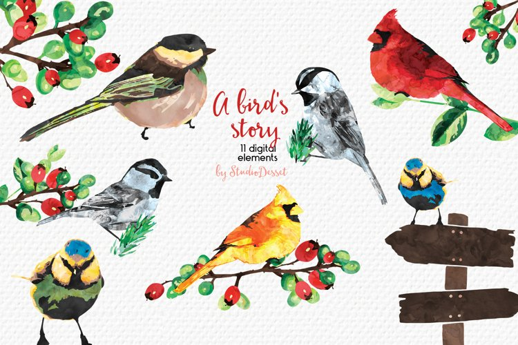 A Bird's Story - Watercolor Illustrations example image 1