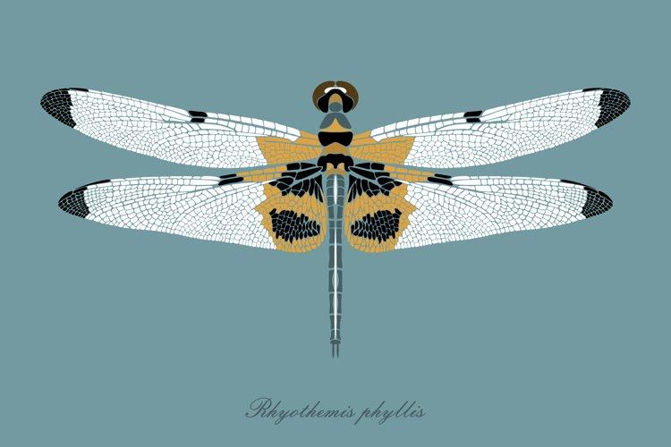 Dragonfly - Rhyothemis Phyllis