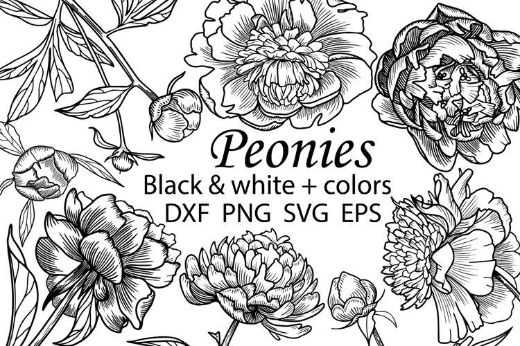 Peonies Clipart Svg, Wedding flowers Svg, Peony Cut Files