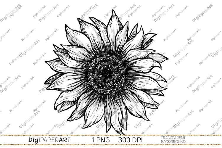 Black and white Sunflower PNG, Sunflower Sublimation design