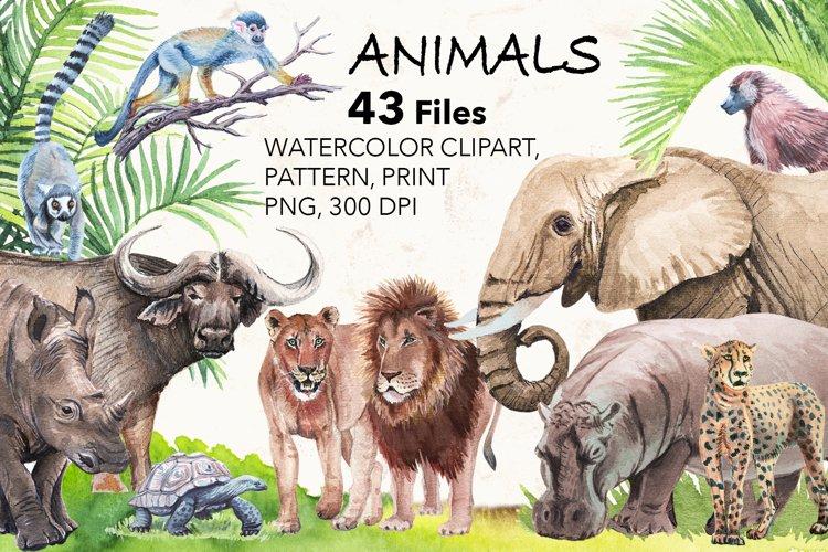 Watercolor Exotic Animals.