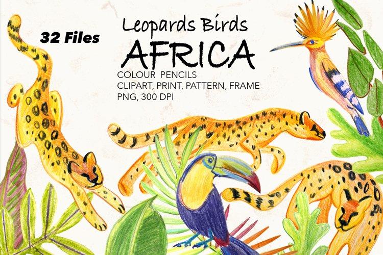 Animals, Birds Africa.