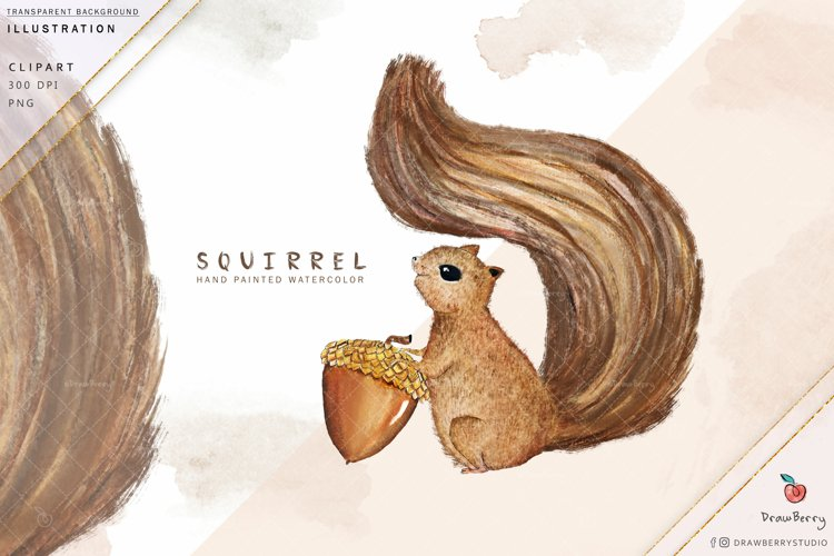 Squirrel Watercolor Clipart | Drawberry i006 example image 1