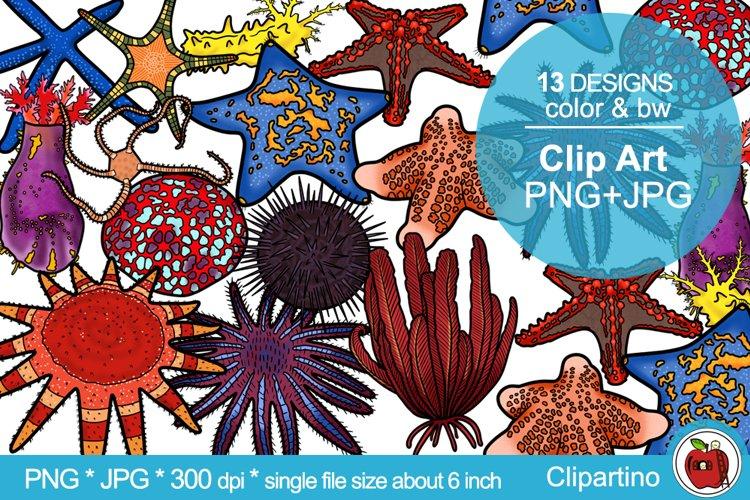 Starfish Clip art-illustration-Sublimation BUNDLE