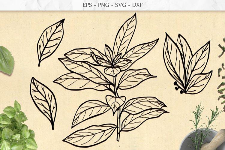 Laurel Leaf and Branch SVG, Nature Garden Botanical Clip Art