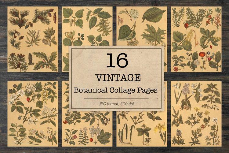 Vintage botanical illustrations