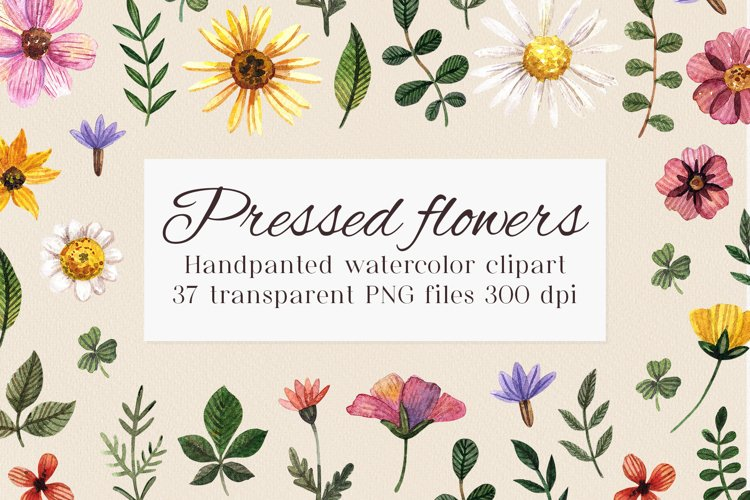 Watercolor flower clipart PNG. Wild pressed flower